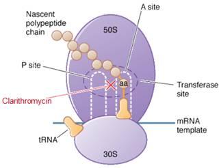 toxoplasma klacid